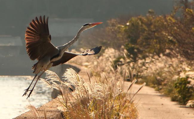 壱岐市「小島神社」でバードウォッチング!神秘の参道は野鳥たちの楽園!