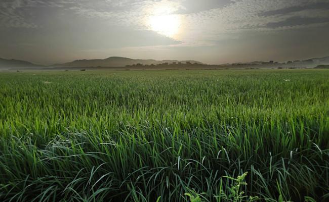 長崎県で2番目に大きな平野「深江田原平野(ふかえたばるへいや)」