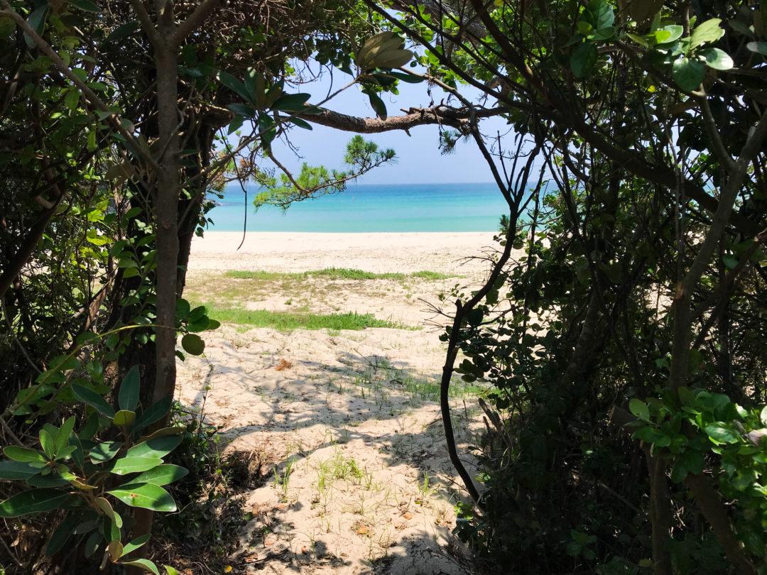 大浜木のゲート