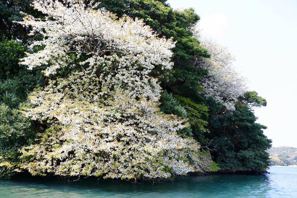 海桜壱岐島