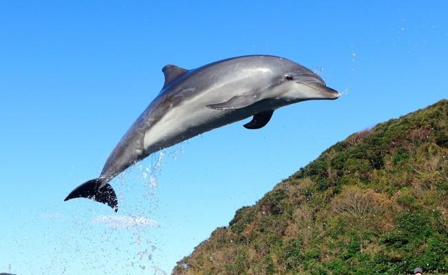 イルカに会いに行ってみた。「イルカパーク」