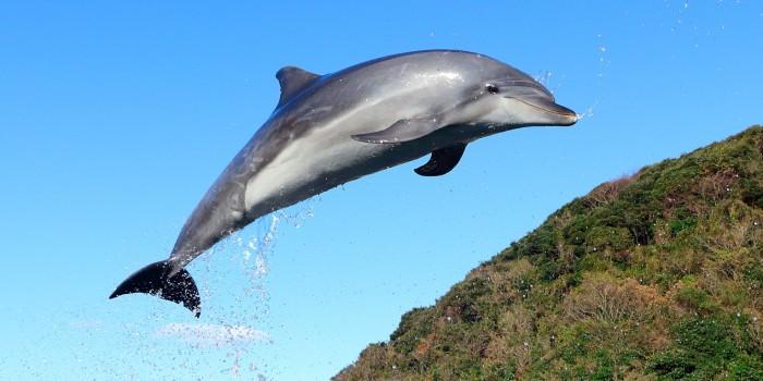 イルカに会いに行ってみた。長崎県壱岐島「イルカパーク」