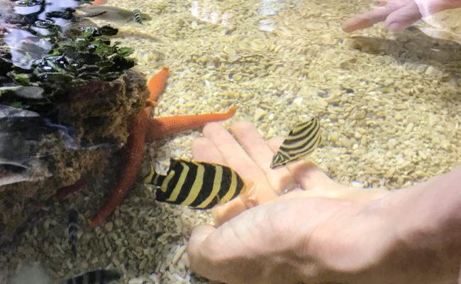 海の生き物と遊べる!「ガサガサアクアハウス」が楽しい!