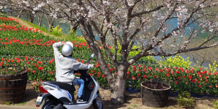 壱岐島のSDGs!レンタル電動バイク「イキエコ」で春の風を感じた!